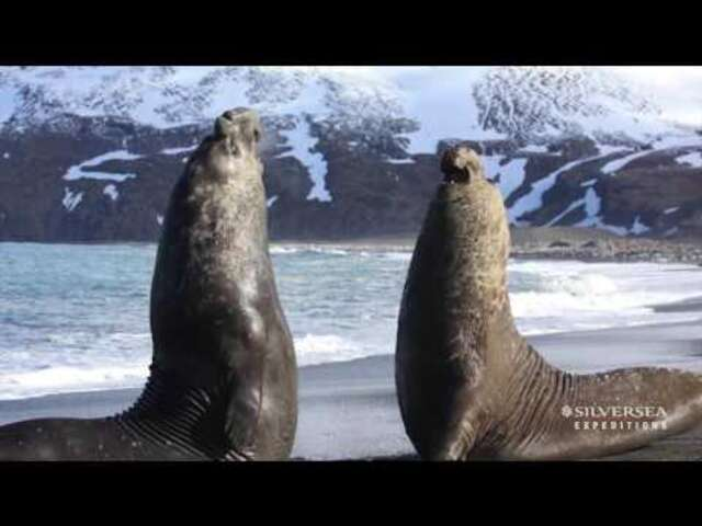 Silversea New Photography Academy in Antarctica