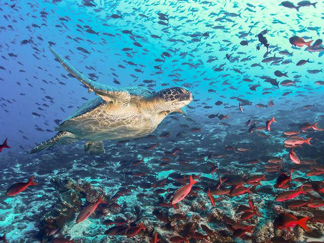 Galápagos Islands: Beyond imagination