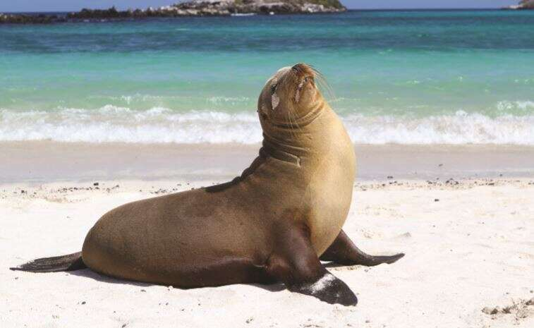 San Cristobal Island – Hotel Blue Marlin