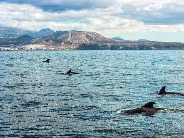 Sailing and Whale Watching