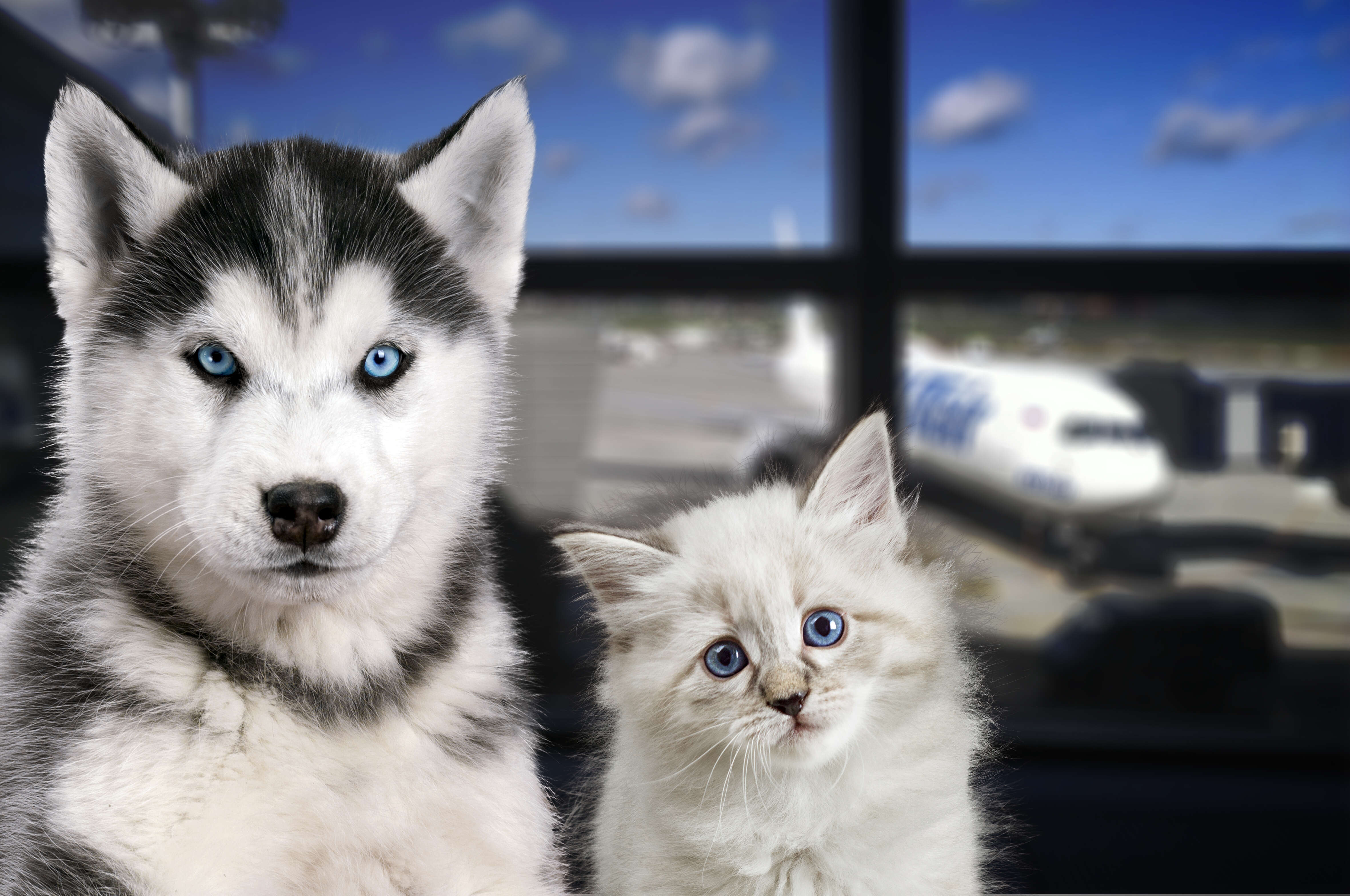 Air Transat now accepting pets onboard