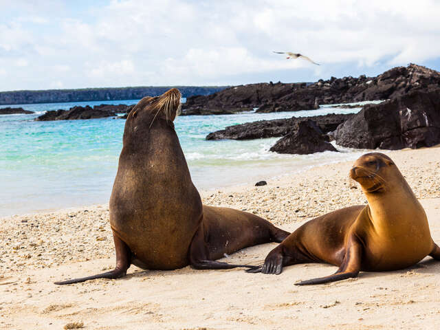 Ecuador & Galapagos Highlights 2021