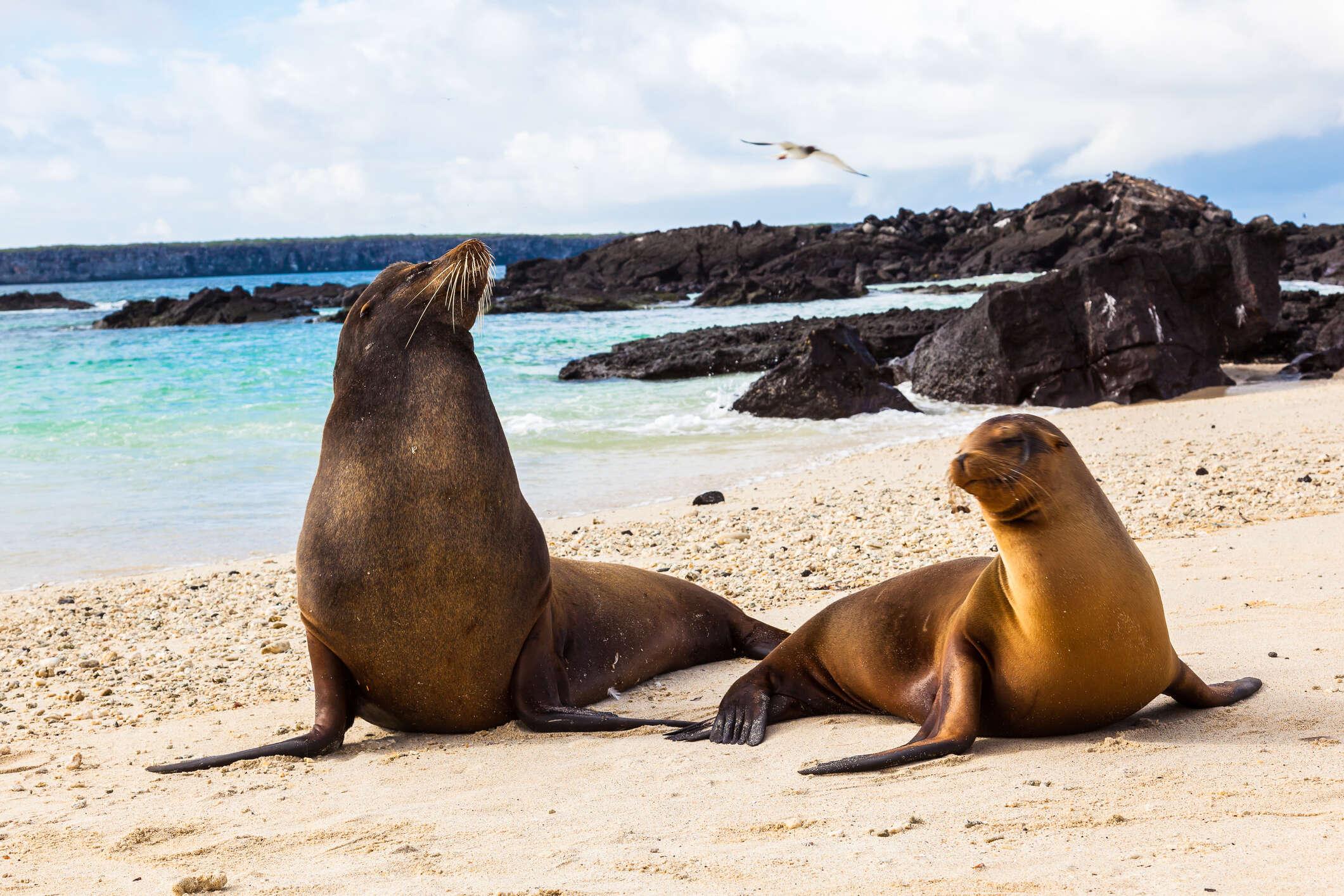 Ecuador & Galapagos Highlights 2021