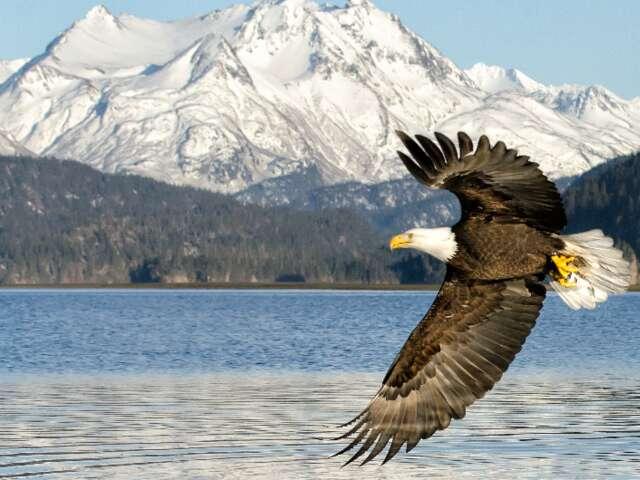 Alaska: America's natural treasure