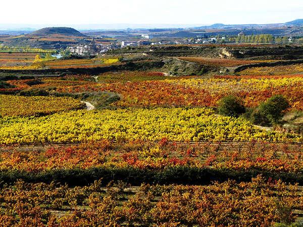 Rioja Region