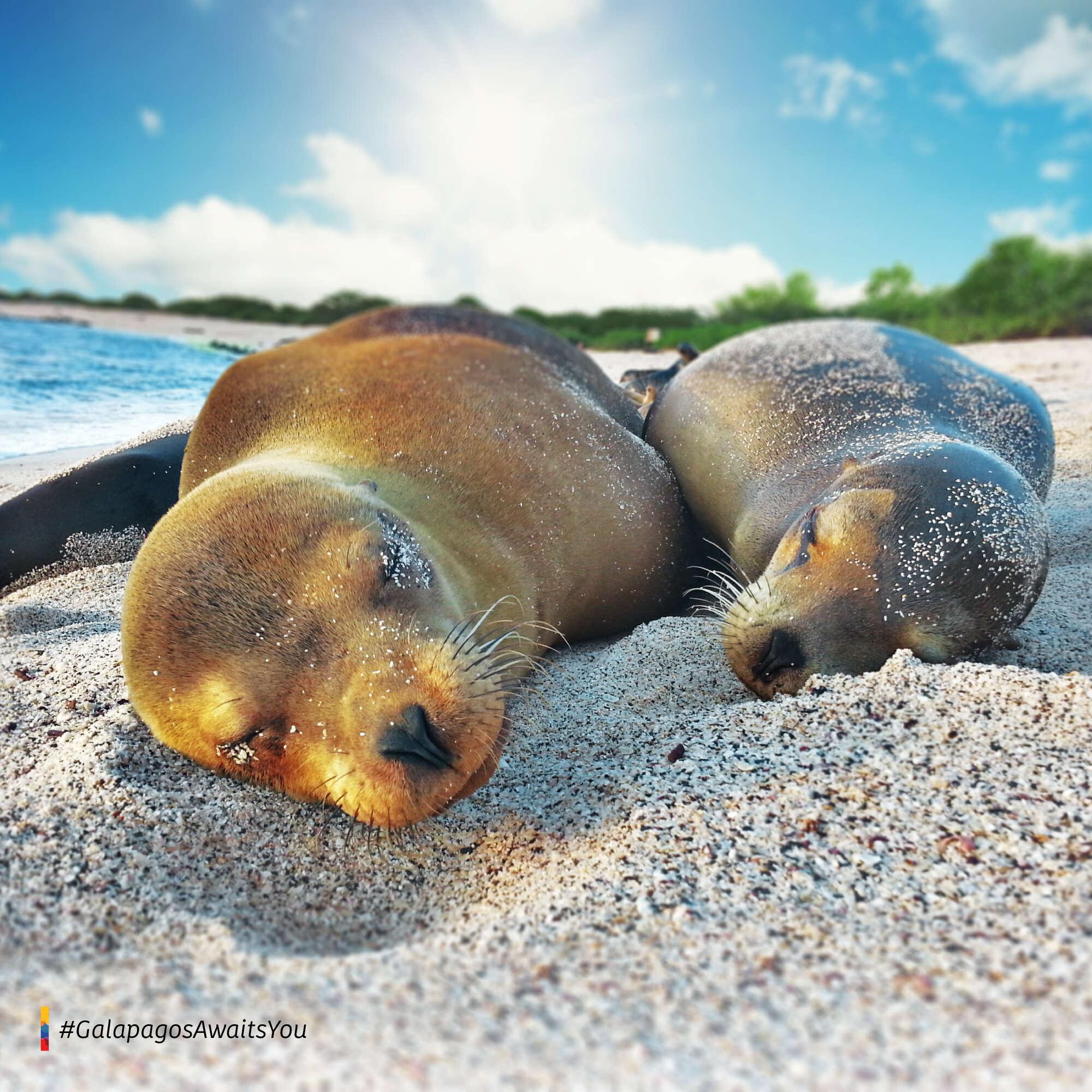 April 20 / San Cristobal Island – Hotel Blue Marlin