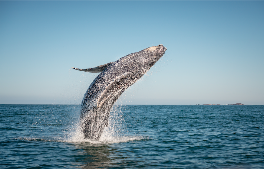 11 Best Places in the World to Go Whale Watching