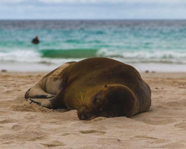 April 18 / San Cristobal Island – Hotel Blue Marlin – 2 nights