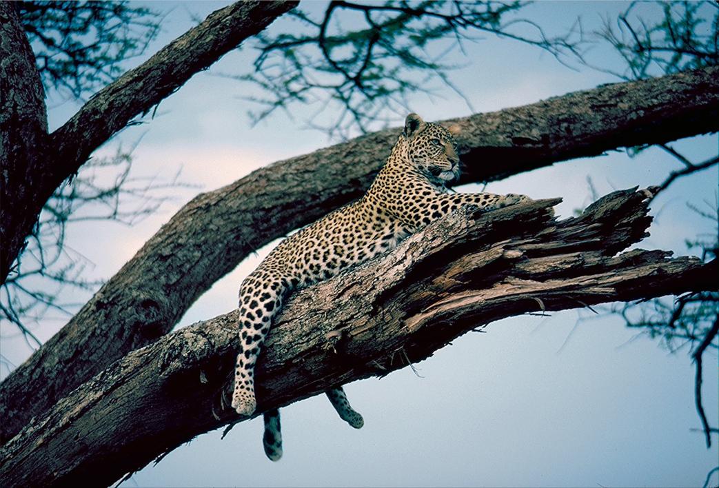 Kruger Nationa Park