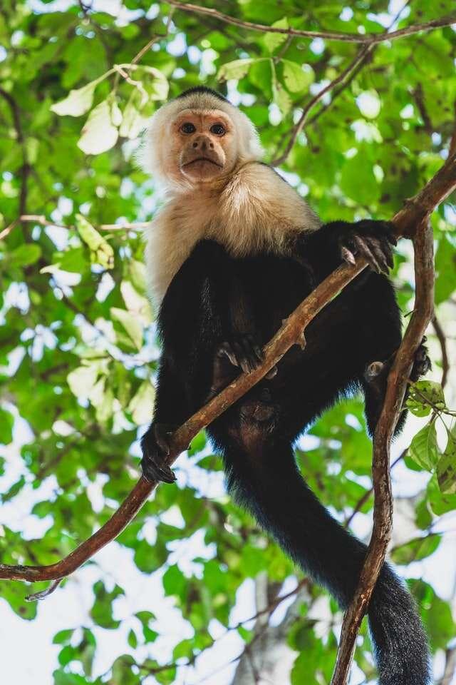 April 13 / Tena – Itamandi Amazon Eco-Lodge – 3 nights