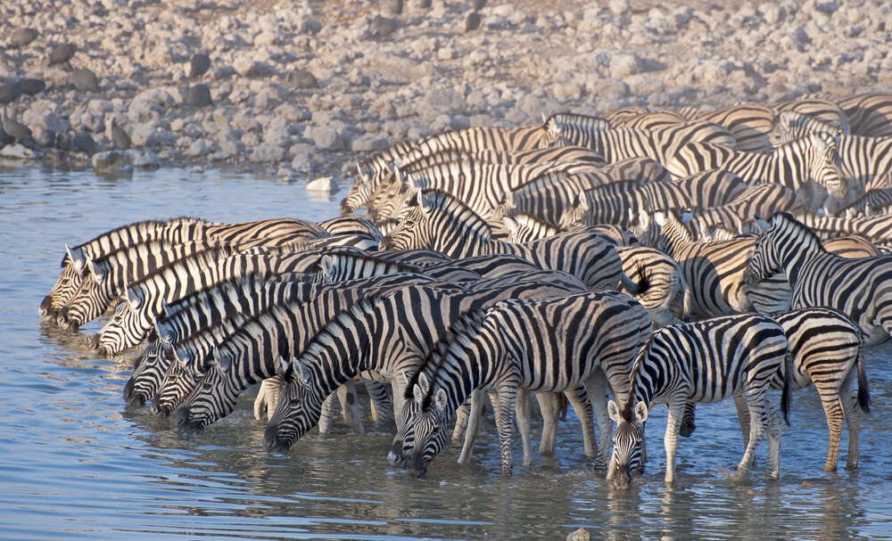 5 things you need to know about Namibia