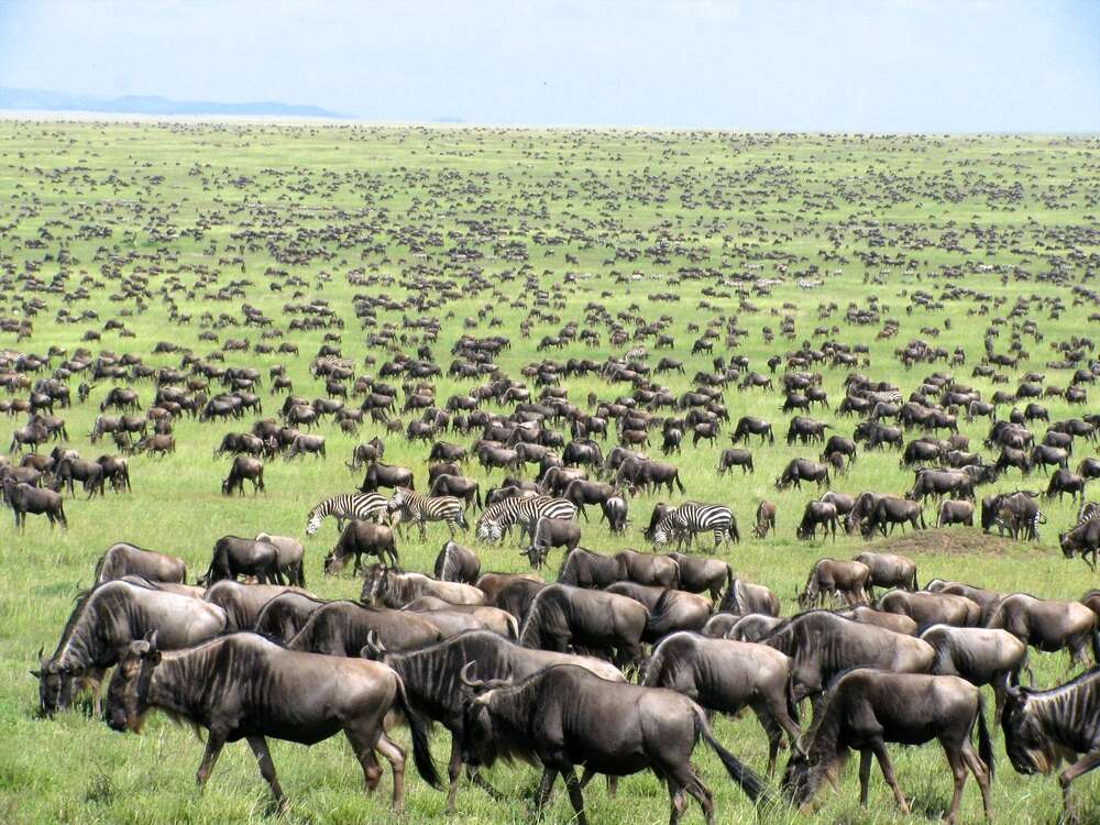 10 things you need to know before you travel to East Africa
