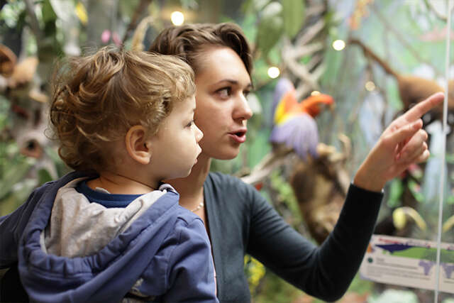 Family friendly museums & galleries in Britain