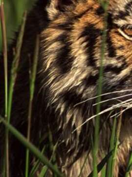 Tigers, Temples & Wildlife in India - Walking Tour