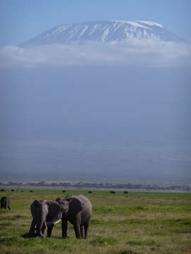 East Africa: In Search of the Big Five