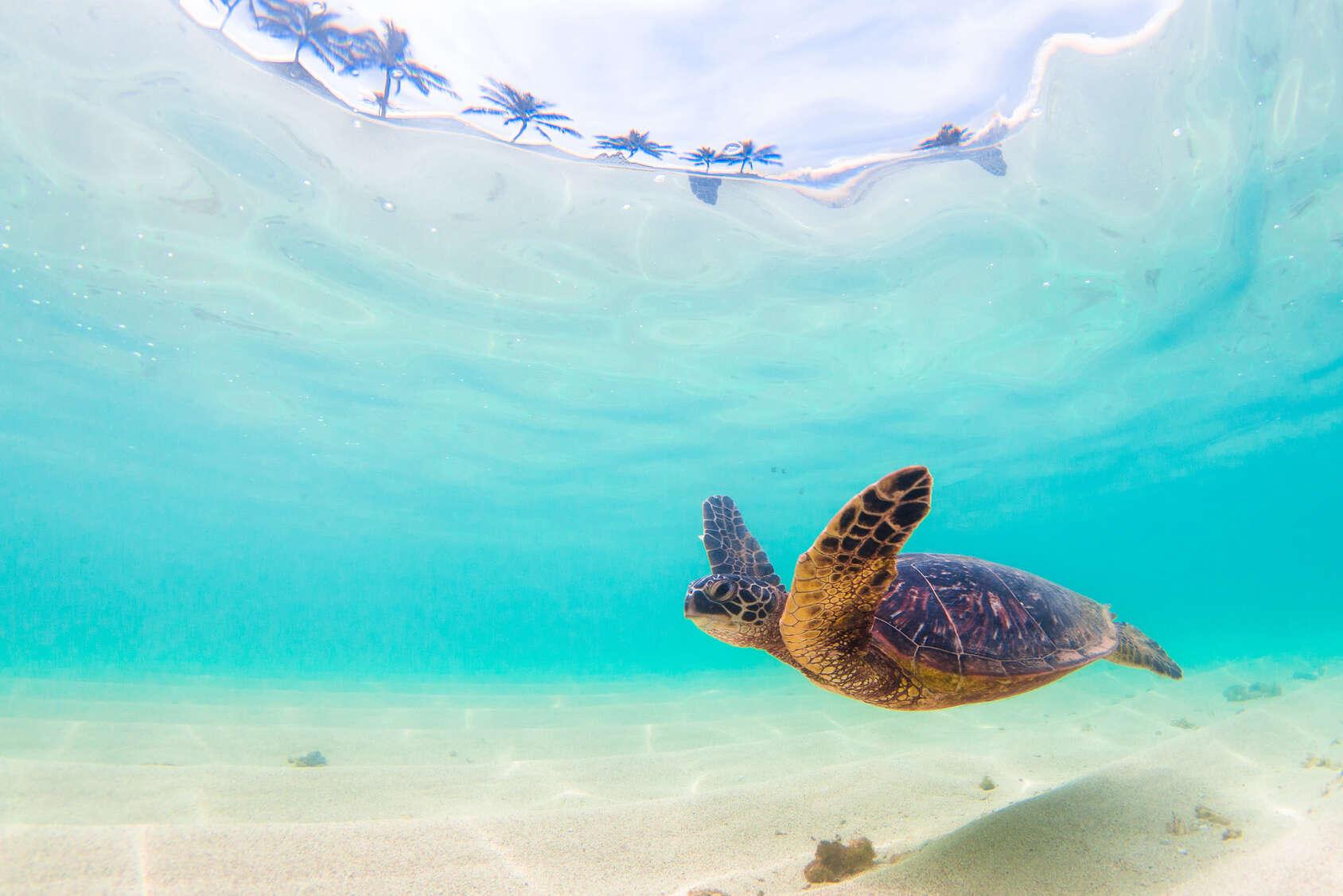 Quick Look at Hawaii's 4 Most Popular Islands