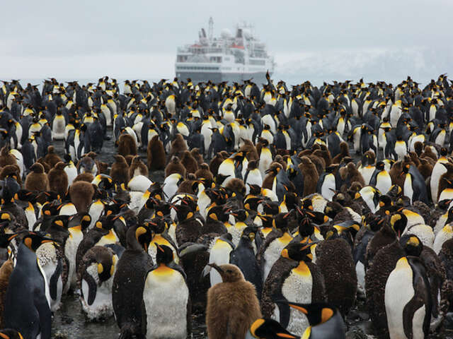 The Ultimate Antarctic Experience