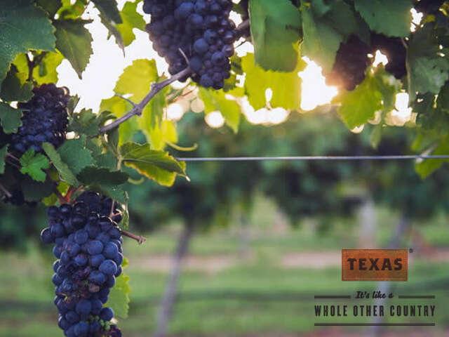 Sip and Savour Award Winning Texas Vineyards