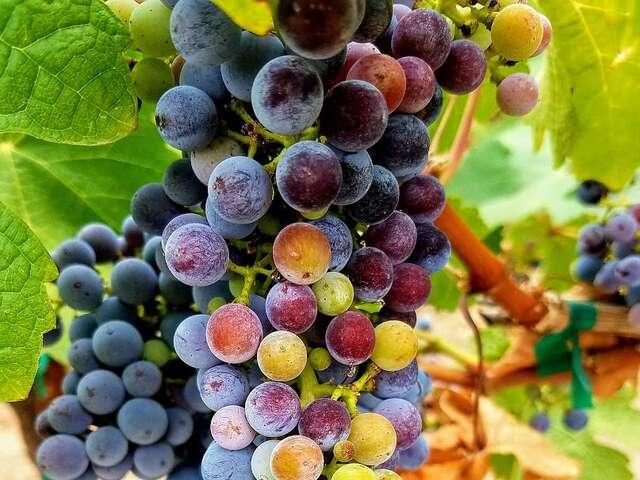 Wine Cruises and Travel