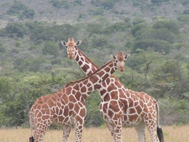 Kenya with Christine