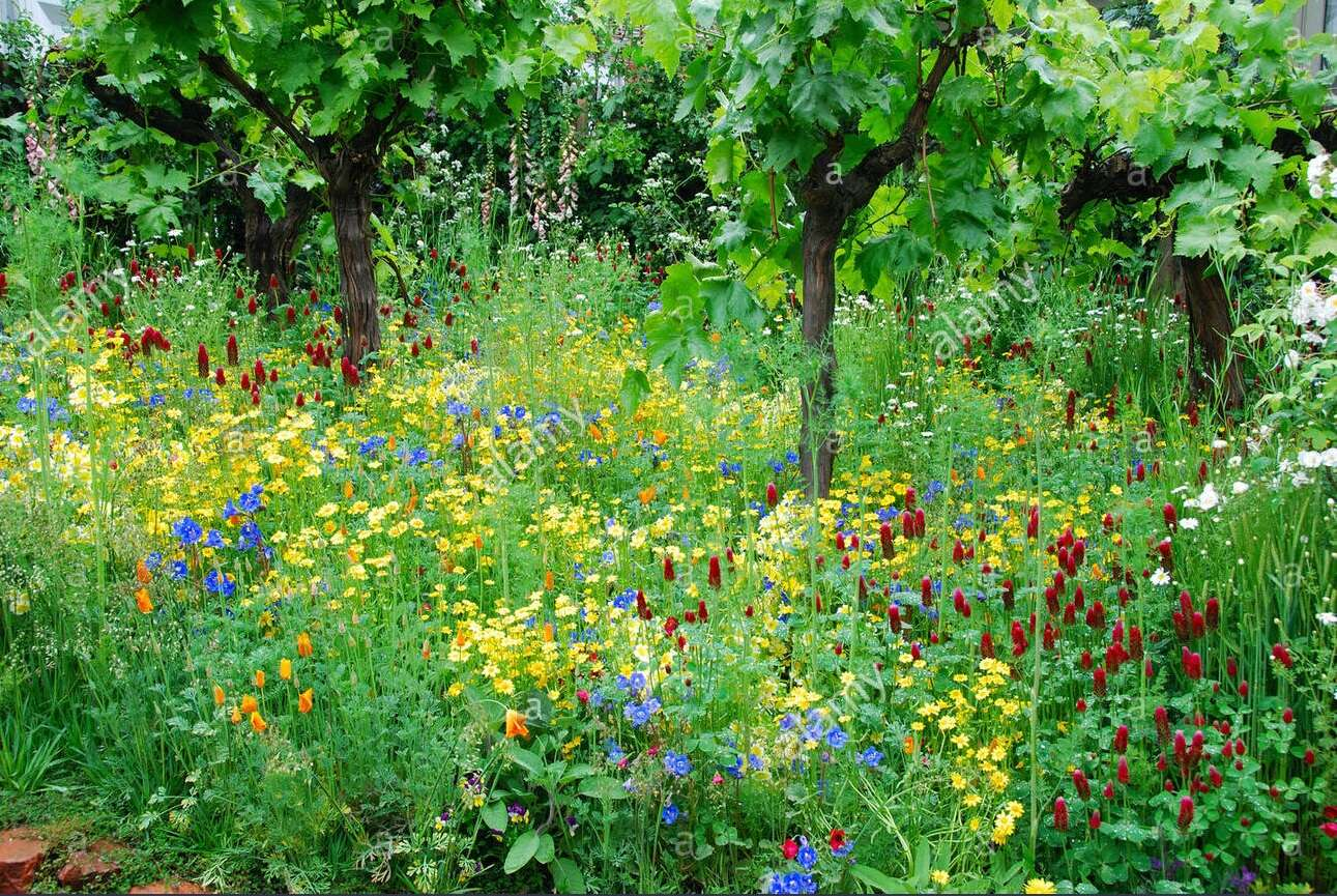 Wildflowers, Rare Wines and Endlessly Delicious Food on A Culinary Journey To The Hidden Enclaves Of Private Estates, Stunning Caves, Cloistered Kitchens and Invitation Only Wineries