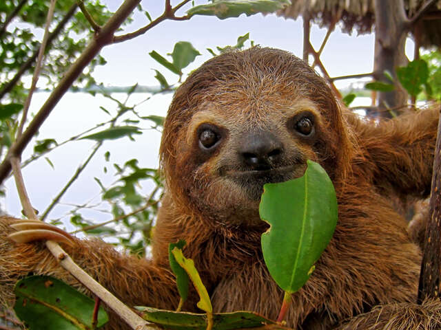 Panama's Sloths and Sandcastles