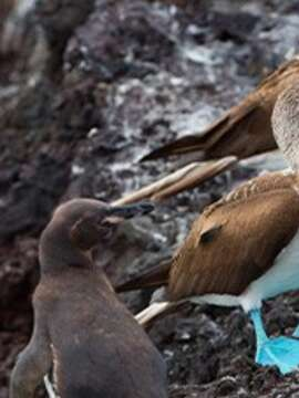 Galápagos by Land & Sea