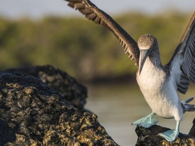 FREE Flights to the Galapagos