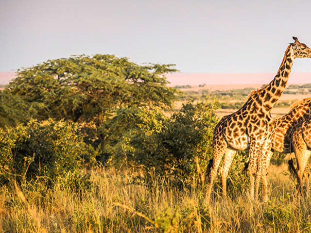 SAVE BIG on a East Africa Odyssey with Goway