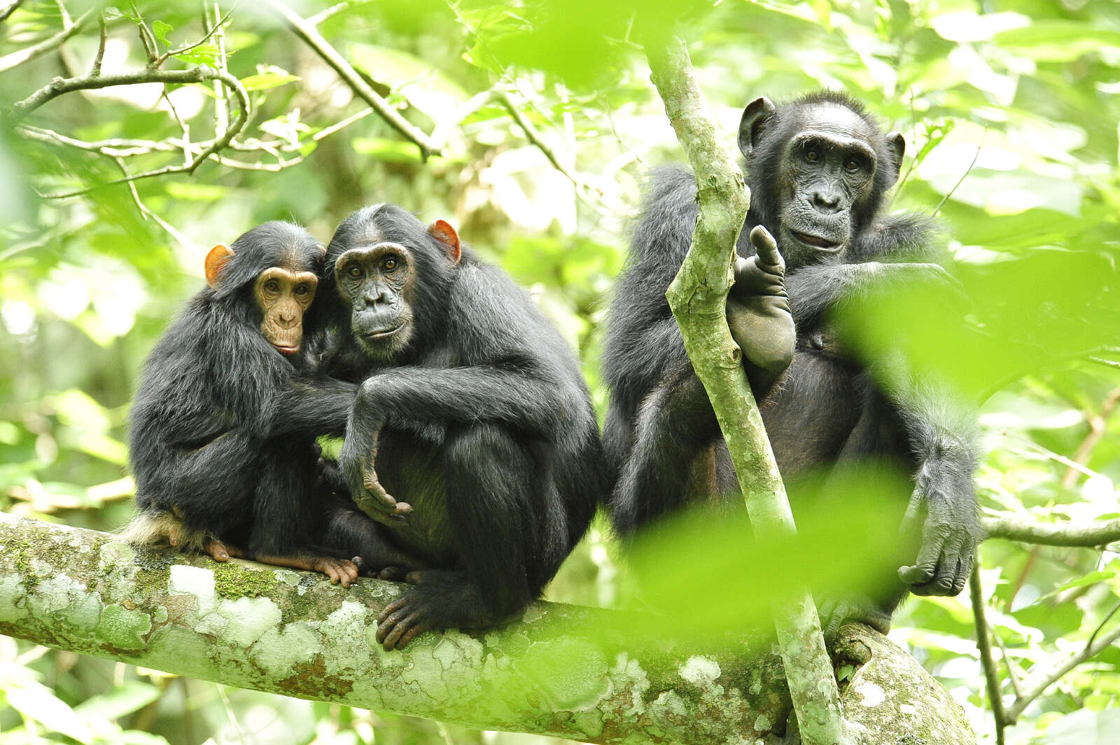 2020 Uganda Safari & Humanitarian Trip