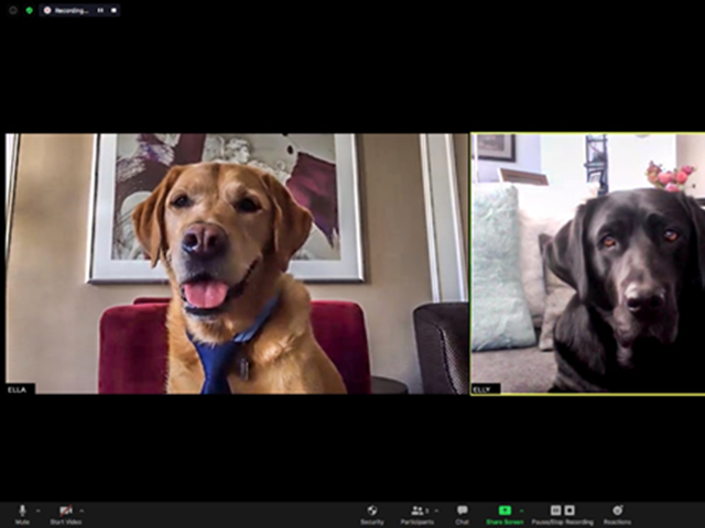 Fairmont Hotel Vancouver's Canine Ambassadors Go Virtual to Raise Money for the Non-Profit That Gave Them Their Start