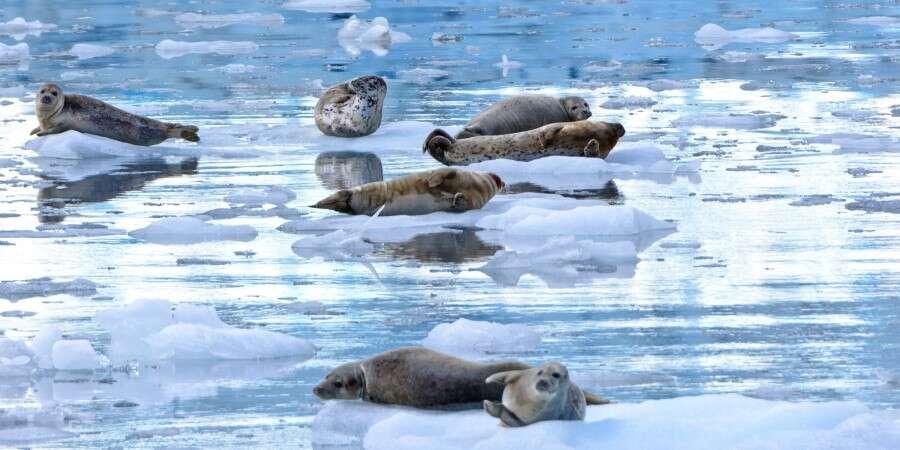 Tidal Glaciers - Icy Bay