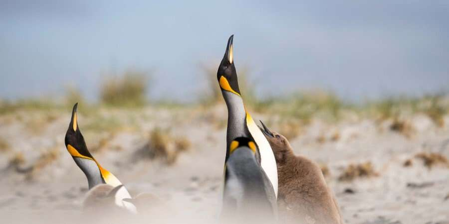 Pubs, Penguins and Perfect Wilderness - The Falkland Islands