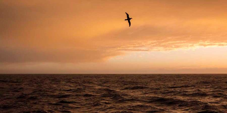Enjoy the Onboard Activities - Drake Passage - At sea