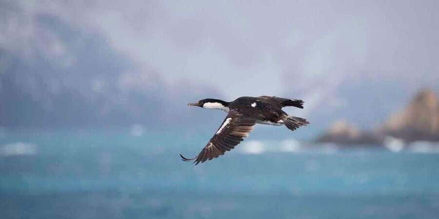 Cruising the South Atlantic - At sea