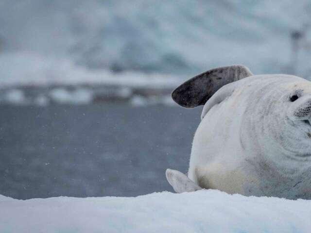 Exploration of Antarctica, Falklands and South Georgia (Itinerary 1)