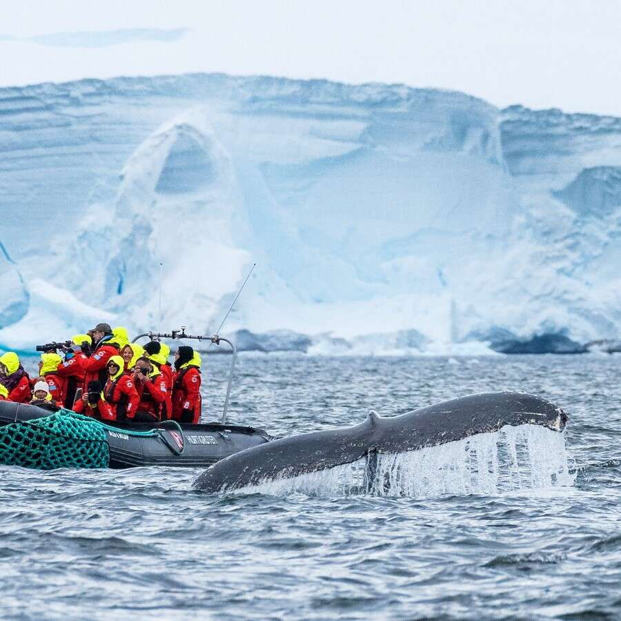 A world of ice and wonder  - Antarctica