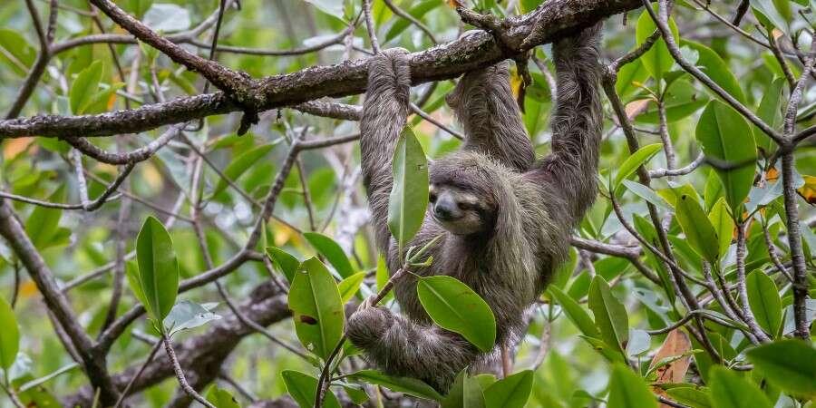 'Galápagos of the Caribbean' - Bocas del Toro, Panama