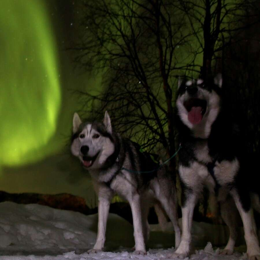 On the lookout for the Northern Lights - Alta