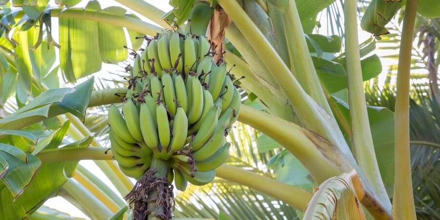 Bananas, Hummingbirds and Petrified Forest - Puerto Bolivar (Machala), Ecuador