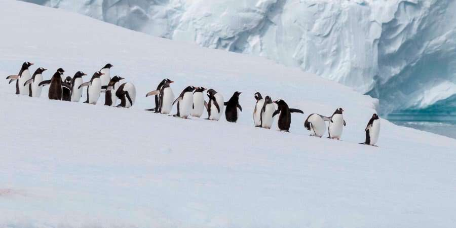 Penguins, Icebergs, Seals, and Whales - Antarctica