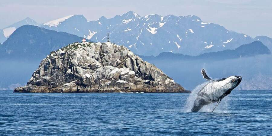 Close to Wildlife - Kodiak