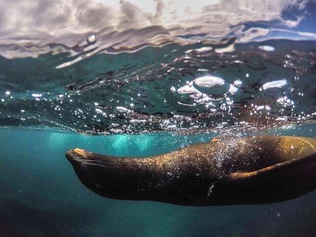 Galapagos Marine Reserve