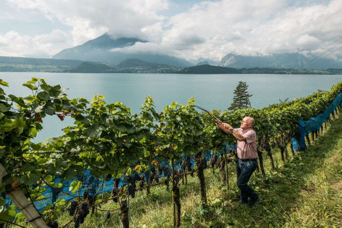 This European Wine Festival Only Happens 4 Times a Century  - And It's This Summer