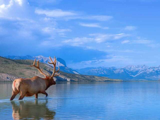 Panoramic Canadian Rockies with Alaska Cruise Verandah Cabin Summer 2018