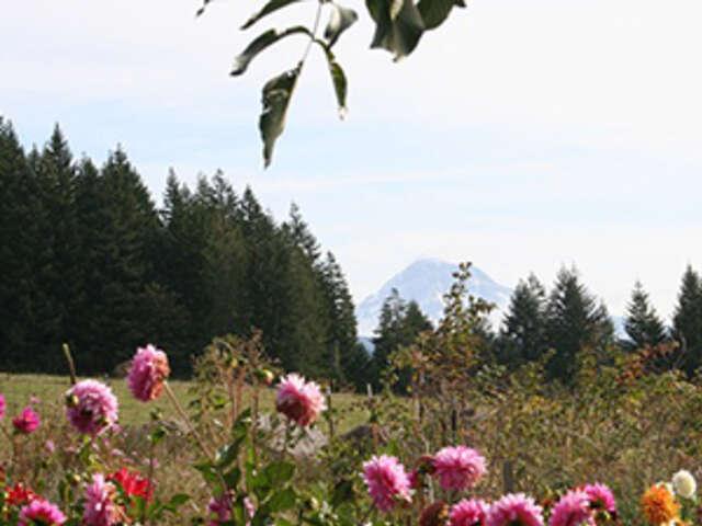 Oregon's Coast, Cascades & Craft Beers