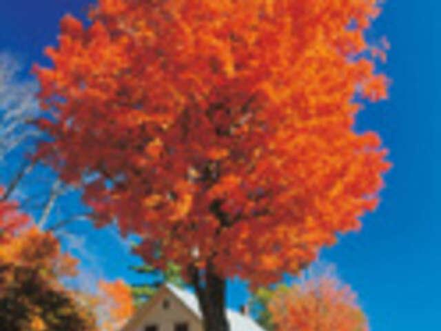 New England's Fall Foliage (Summer 2019)