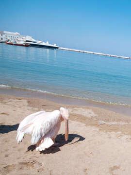 Sailing Greece - Mykonos to Kos