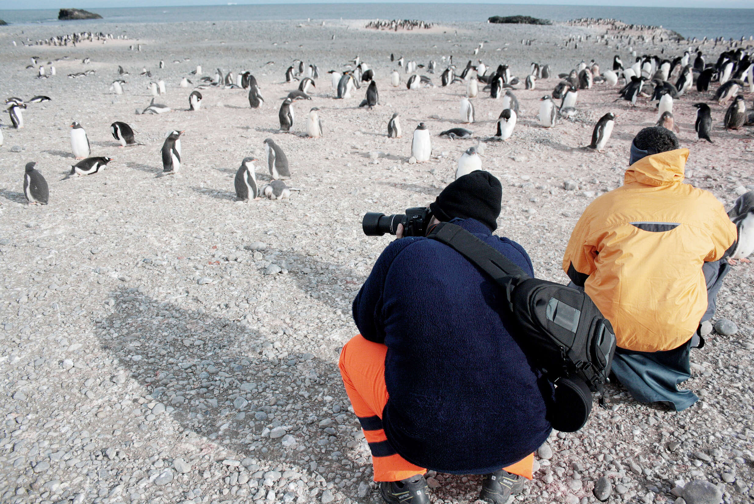 Journey to Antarctica: The White Continent aboard the National Geographic Explorer