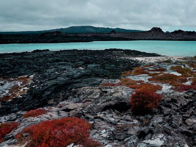 Galápagos — North, Central & South Islands aboard the Estrella del Mar
